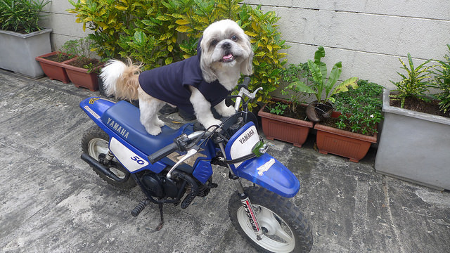 where to buy dog clothes in manila bark buy philippines