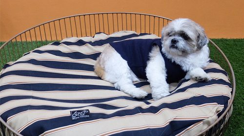 bowhouse ph dog beds for sale in manila