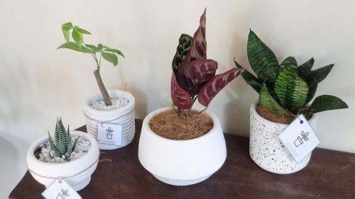 where to buy indoor plants online in manila
