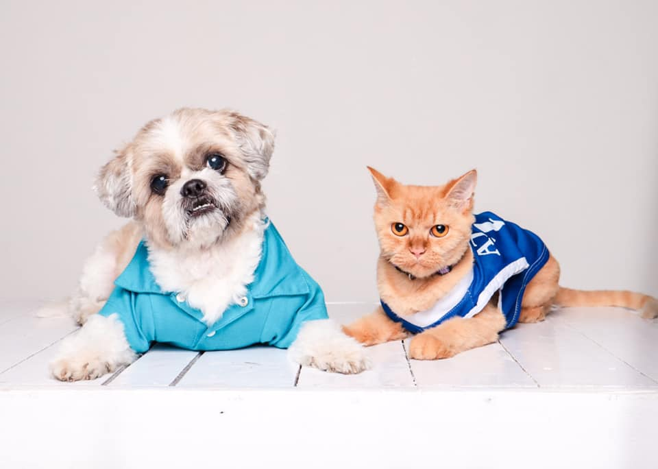 how to take care of pets with booboo the shihtzu and bellatrix the persian doll face