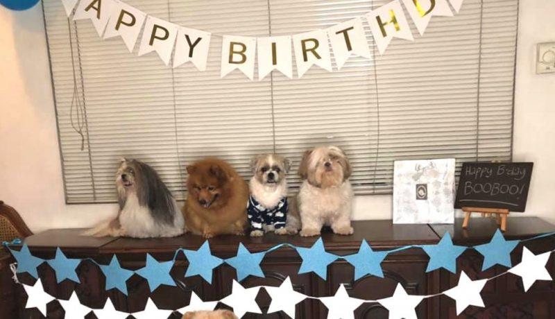 booboo's birthday