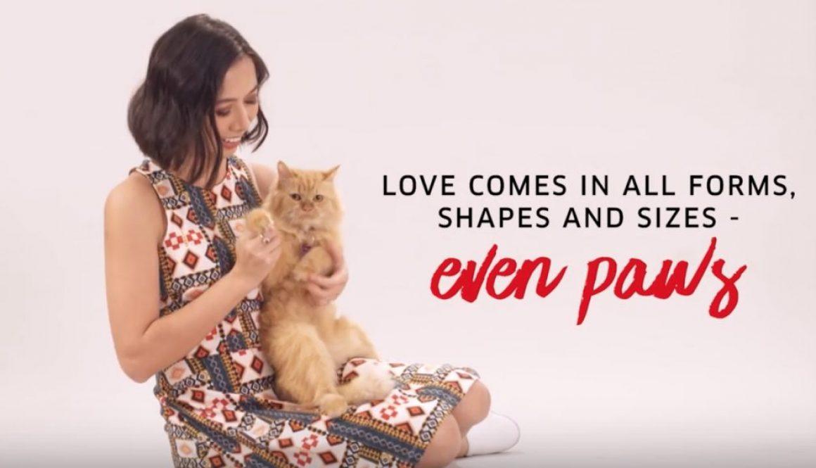 bellatrix cat commercial model