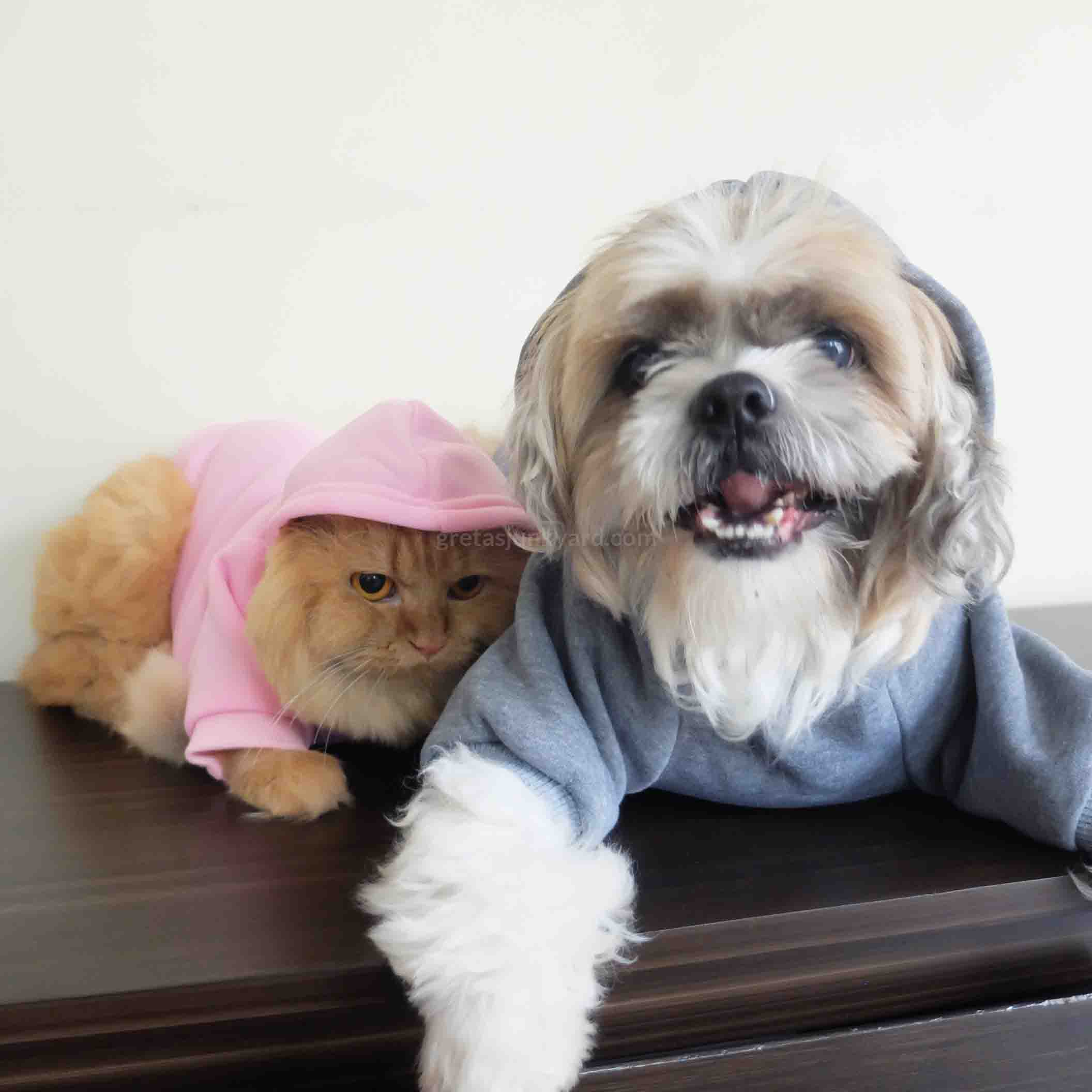 bellaboo pet hoodies6