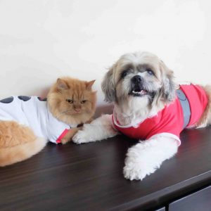 Pet Christmas Outfits
