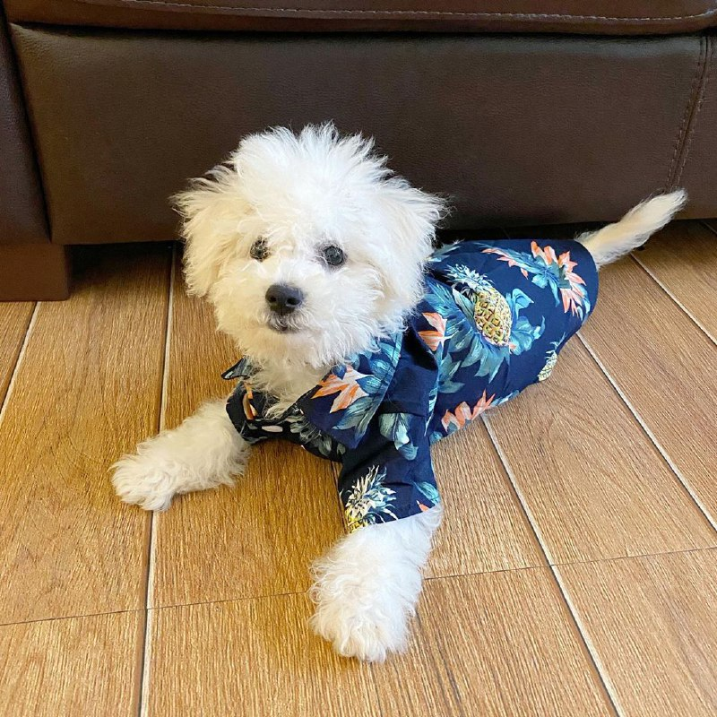 where to buy dog clothes online