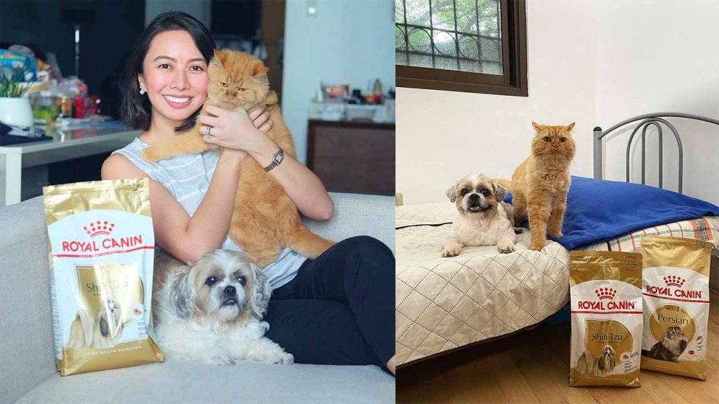 how to take care of pets with royal canin