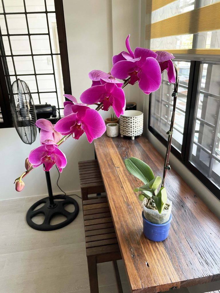 potted violet orchid on a table from flower delivery manila