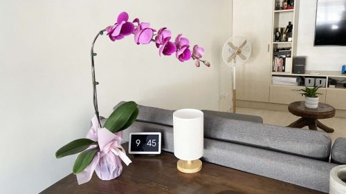 potted violet orchid to decorate your home from flower delivery manila