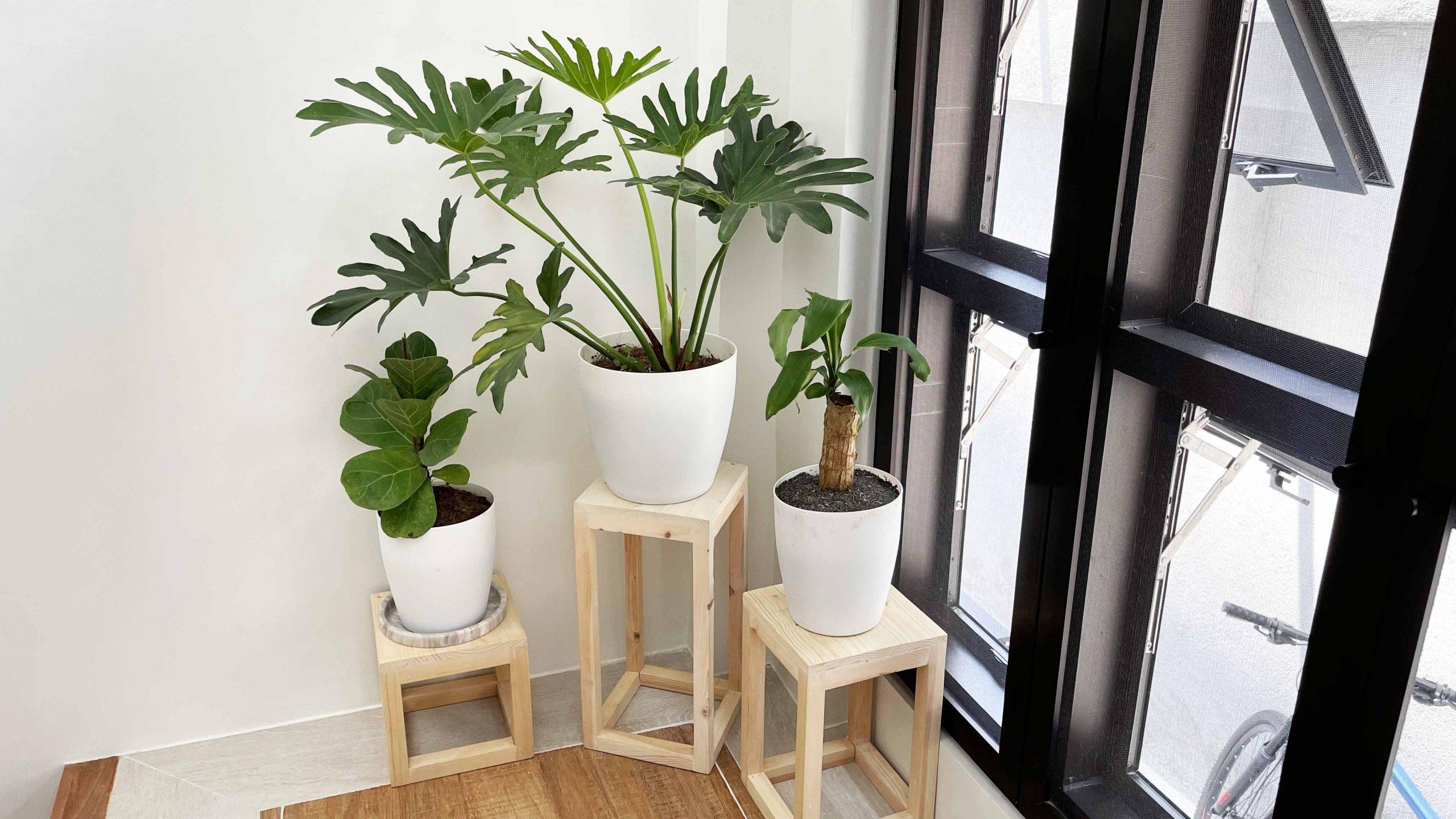 indoor plants in the philippines 4
